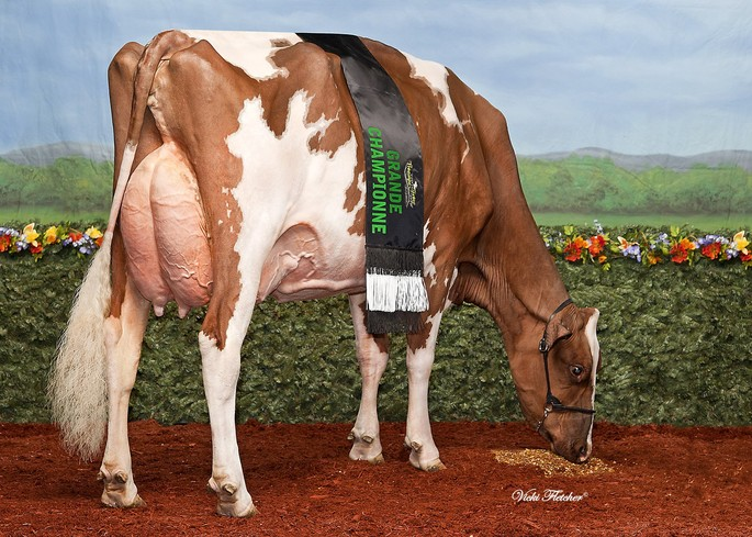BBM CP CANDY-RED VG-88