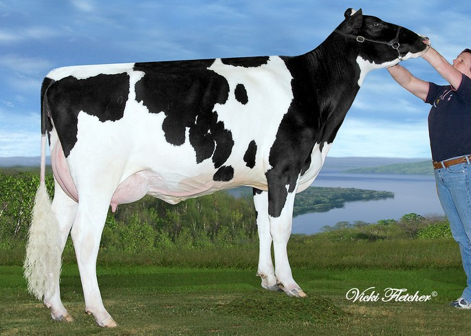 Rayon D'or Windbrook Laititia VG-87 X<br />Atwood
