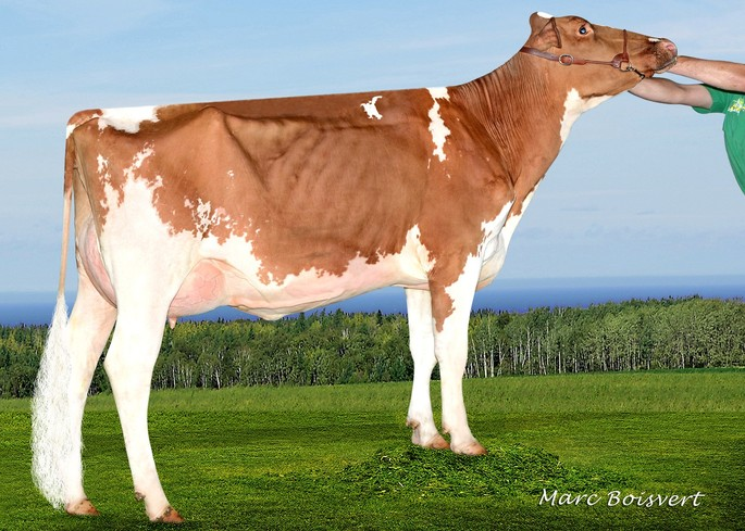 Rayon D'or Shaquille Maybeline VG-85-2YR X<br />Crown-P
