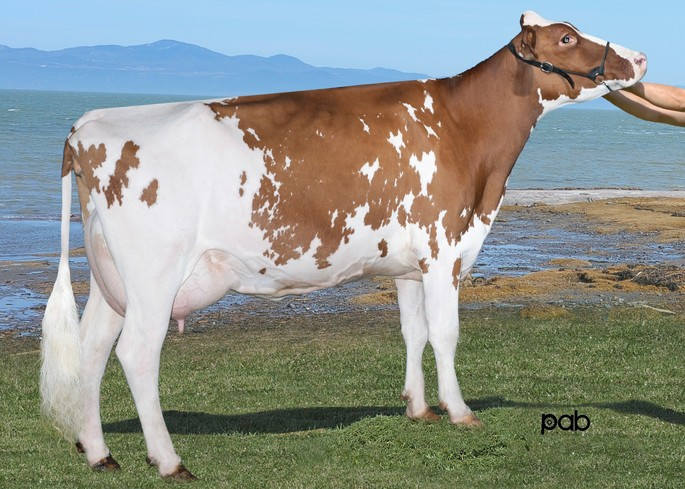 Rayon D'or Selayo Lutuanie VG-86 X<br />Malone