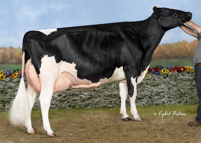 Rayon D'or Snowman Adele VG-86 X<br />One direction (sexée)