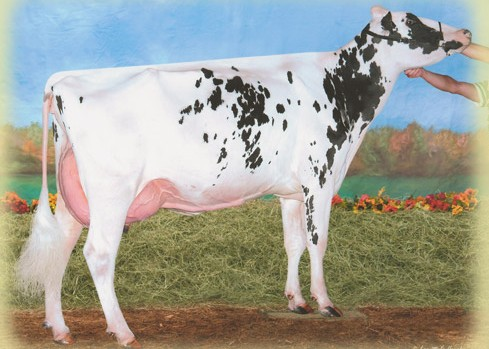 Windsor-Manor ZSH Panda ET VG-87 X<br />SuperShot